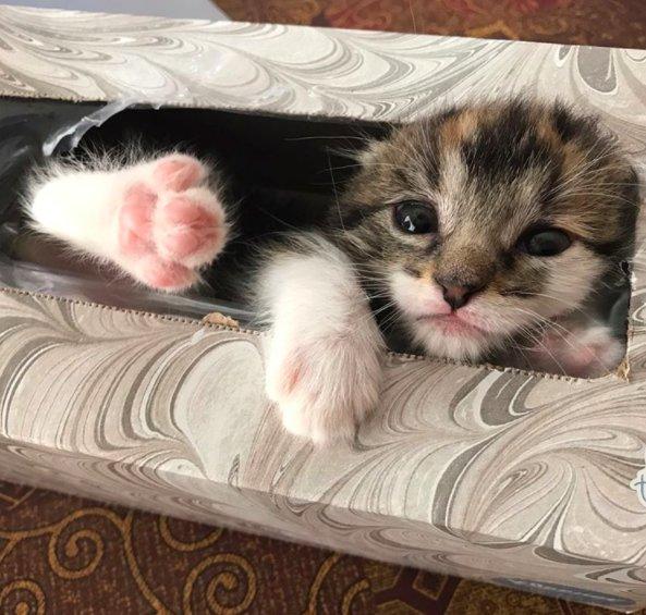 剛帶領養的小貓回家,家人就花了1個小時「找小貓」直到爺爺想拿衛生紙...頭出來時太可愛了!