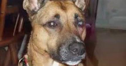 他們領養狗狗後發現他每天不睡在床邊盯著他們看很詭異!詢問後挖出讓人心碎的慘痛過去!