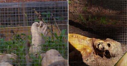 首座「屍體農場」為的就是教人如何破案。訪客:「祂在瞪著我尖叫!」(影片)