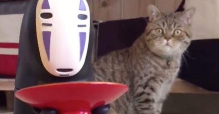 新玩具無臉男把錢吃進去,旁邊貓貓被嚇到表情超爆笑!(影片)