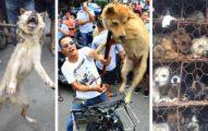 被騙慘!「中國狗肉節照辦」大量狗狗被屠殺,肉販「太狡猾」動保團體被騙慘!