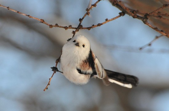 他遇到這種超可愛的鳥鳥「停在手上討摸摸」! 回家一查沒想到他們「很講義氣」!(影片)