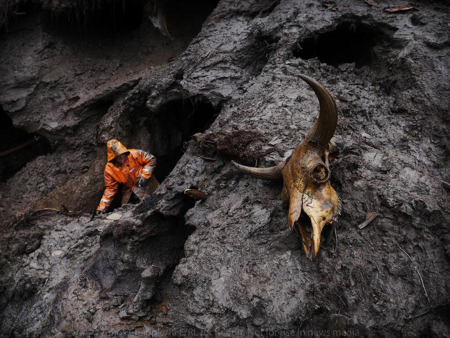 攝影師混進非法猛獁象牙挖掘團目睹「財富如何害死一個人」恐怖真相,1週可賺3百萬! (37張圖)