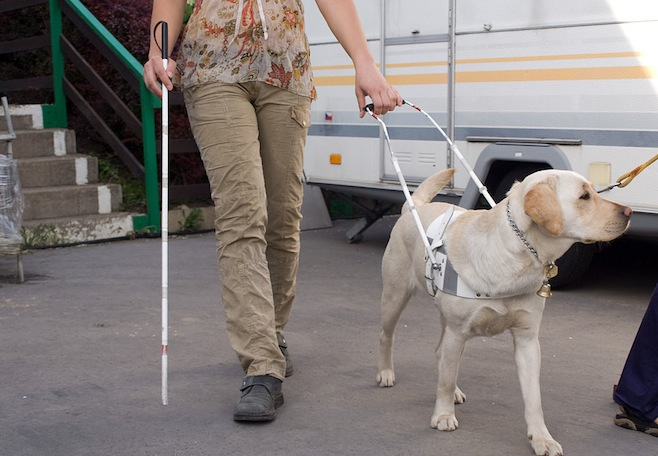 Image result for guide dog woman