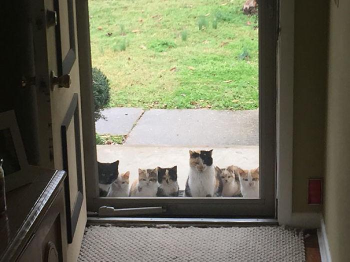 在家看到貓驚覺「我沒有養貓啊」 原來大家是這樣開始養貓的!