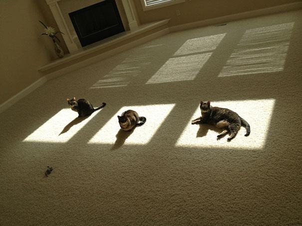 30張證明「貓咪能攝取太陽能」的驚人證據照!#25 這是喵星上的祭拜儀式嗎?