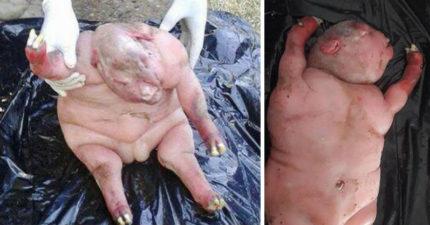 南非驚現「半人半羊畸形生物」,當地人堅信「人獸交惡魔兒」必須燒死!動物博士:「不可能...」