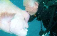 潛水夫之戀!他25年來每天和「神秘怪魚好友」見面,一打「暗號」立刻現身討吻!(影片)