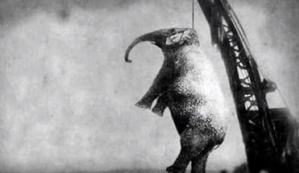 大象瑪莉失控踩死「長期虐待她」的馴獸師,遭處「起重機絞死」折磨1小時半2500人圍觀叫好!
