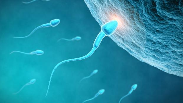 一直以來對精子的認知錯慘了,原來當年我們不是最快精子!
