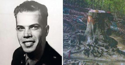 美國空軍中尉二戰時身亡,72年後在一顆大樹「中央」發現他的遺體!