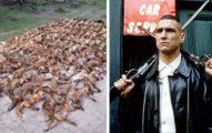 知名演員上傳「100隻狐狸屍體」照片,「被罵翻」他這樣說...
