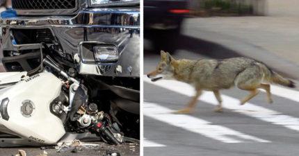 「狗狗衝出馬路」害騎士閃避不及,摔向對向車道「被大貨車輾過」...