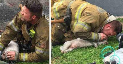 消防員為昏迷狗狗「戴氧氣罩+心肺復甦」永不放棄,20分鐘後奇蹟發生了!