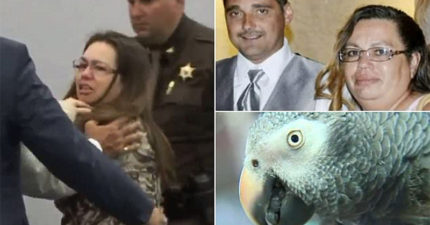 毒婦謀殺丈夫「無目擊證人」死不承認,家中鸚鵡「這句話露餡」讓她GG了!(影片)