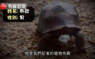 買玩具烏龜稱「走失了」,去找寵物溝通師諮詢,他回「他還活著」!