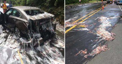 離奇的鰻魚車禍,分泌出「濕濕黏黏液體」讓人好害羞!