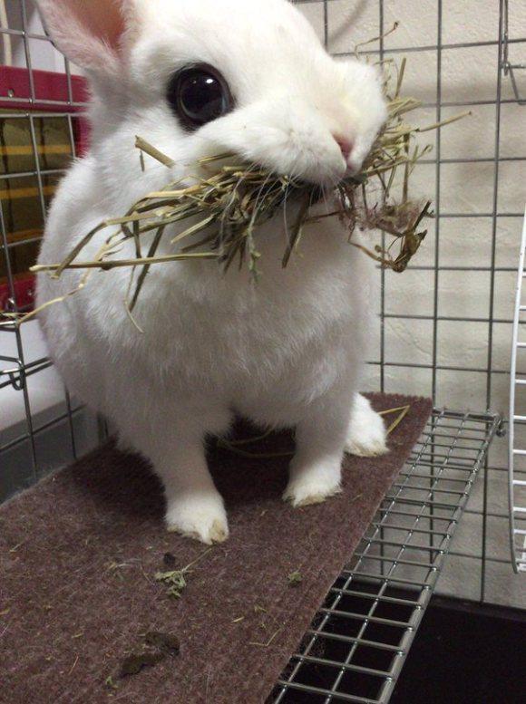 兔子被沒收食物「立刻狠咬一大口抗議」,模樣萌翻「飼主要注意了」!