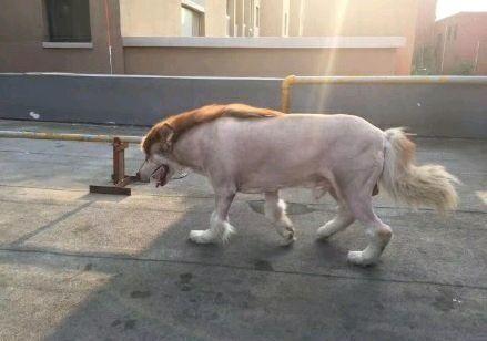 請老爸幫忙照顧狗狗一天,接他時外觀被改造成「某種神奇寶貝」差點噴血!