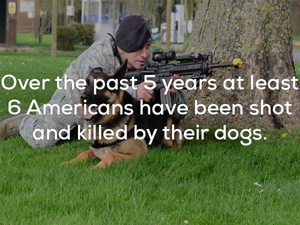 25個會讓你感覺涼颼颼的驚悚事實。#6 每年這麼多人被狗狗拿槍射死。