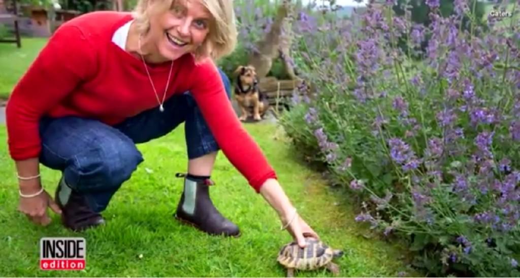 從小養在新家的寵物龜 失蹤2年後…徒步2公里「爬回20年前老家」!
