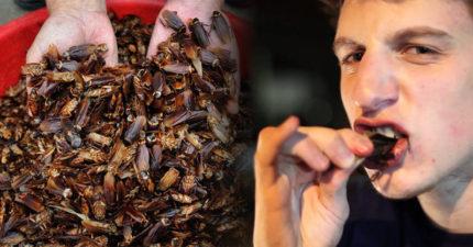 男友愛吃蟑螂怎麼辦?密封袋壓死再吃「口感酥酥脆脆」,她崩潰PO文求救:我真的很愛他!
