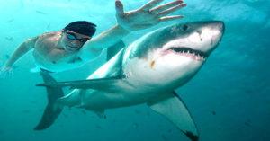 「飛魚」菲爾普斯PK大白鯊之戰!比賽結果「騙很大」讓粉絲氣炸!(影片)