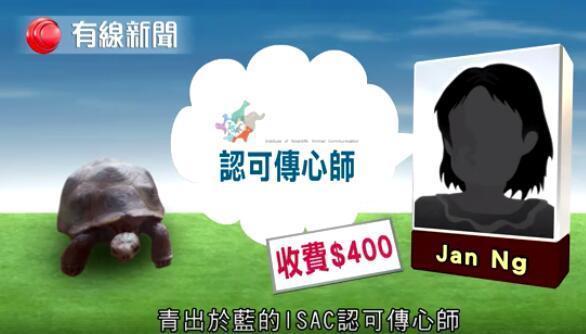 買玩具烏龜稱「走失了」找寵物溝通師諮詢 他自信回:還活著