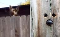 鄰居看不慣隔壁的狗狗「跳著打招呼」,做出最貼心的「改建」! (影片)