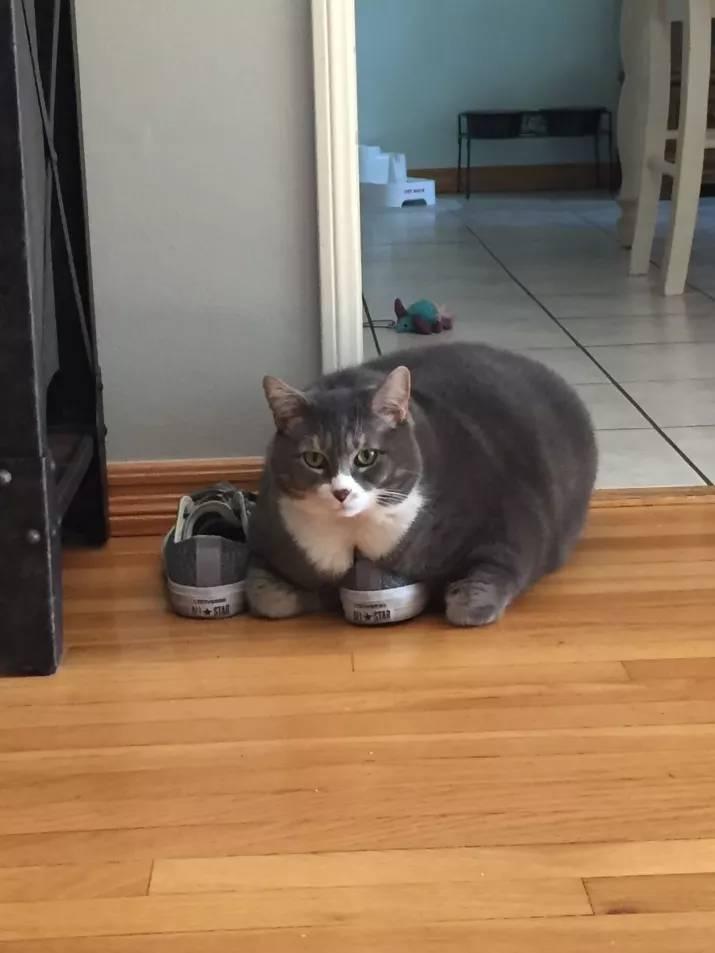 30隻胖到已經快要4D的「爆萌圓滾滾胖貓」。看完後療癒到想睡~