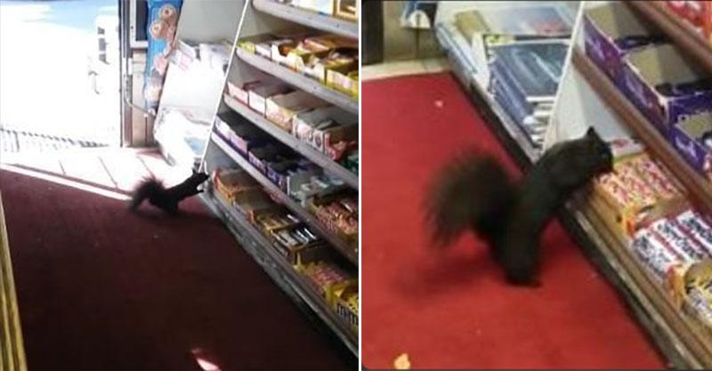 店裡有40條巧克力棒被偷走,看監視器才發現是「老江湖小偷」讓人又氣又想笑! (犯案影片)