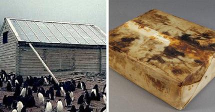 南極發現「106年前水果蛋糕」,「散發出香氣」看起來可以食用!