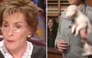 霸氣法官請女子:「把狗放下來」,案情秒水落石出!