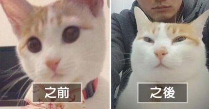 萌貓轉大人「女神→阿珠貓」,主人崩潰喊「也差太多了吧!」網友幫QQ:叫阿罵出來面對