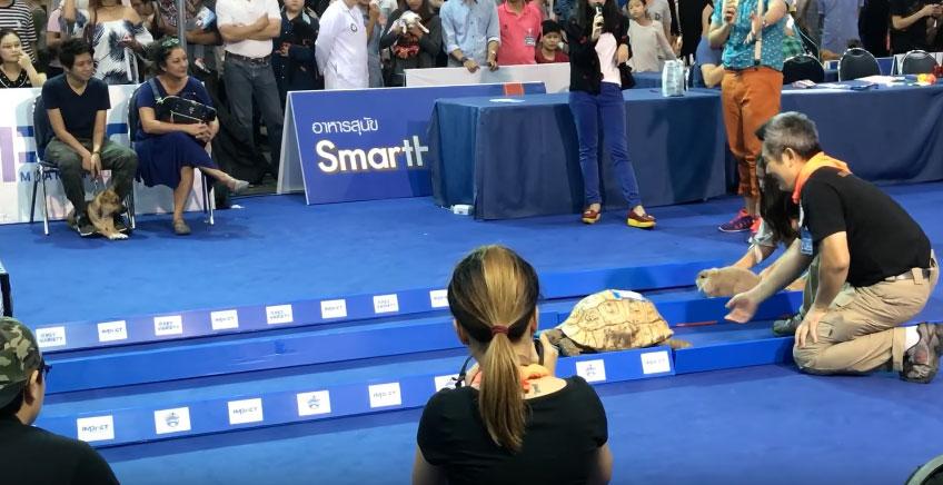 真正的龜兔賽跑!比賽結果跟童話故事一樣嗎?