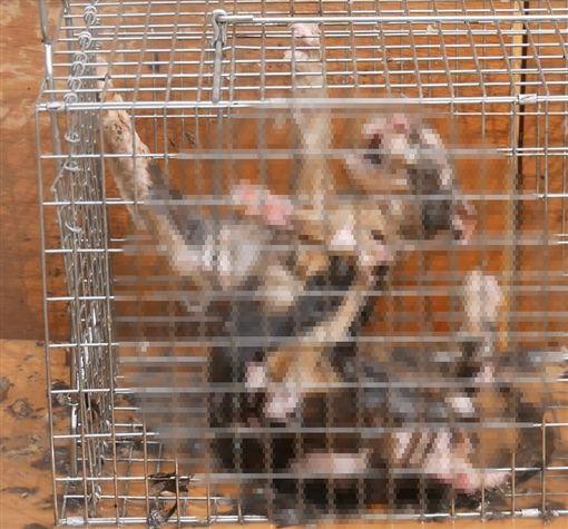 52歲男虐殺13隻貓,噴火燒到全身脫皮慘死!他錄全程:「我是消除有害動物,沒有違法。」(畫面慎入)