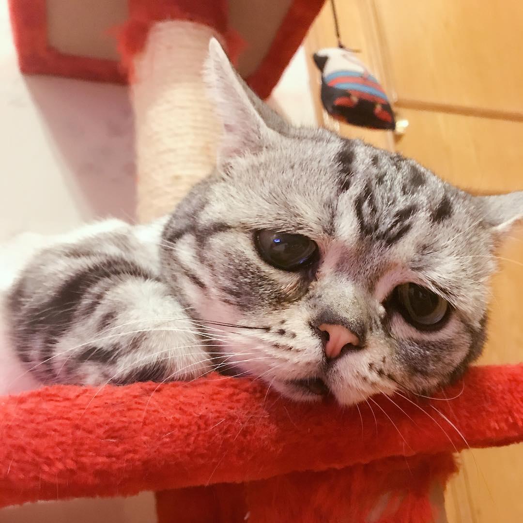 史上最「憂鬱哀愁」的貓咪,超萌「水汪汪無辜眼神」你為麼不把飯飯給他吃?