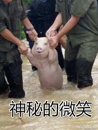 四川洪水虐村這隻「幸運豬仔」獲救後,被揪2耳露出「超爽笑容」!很快就被網友P爆了!( 9張)