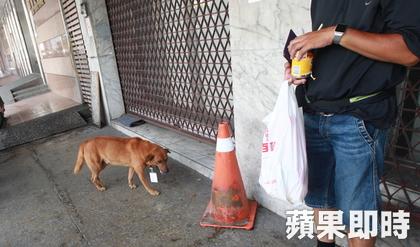 「台版忠犬小八」在醫院急診門口徘徊6天不肯走,「脖子上吊牌」讓路人噴淚。