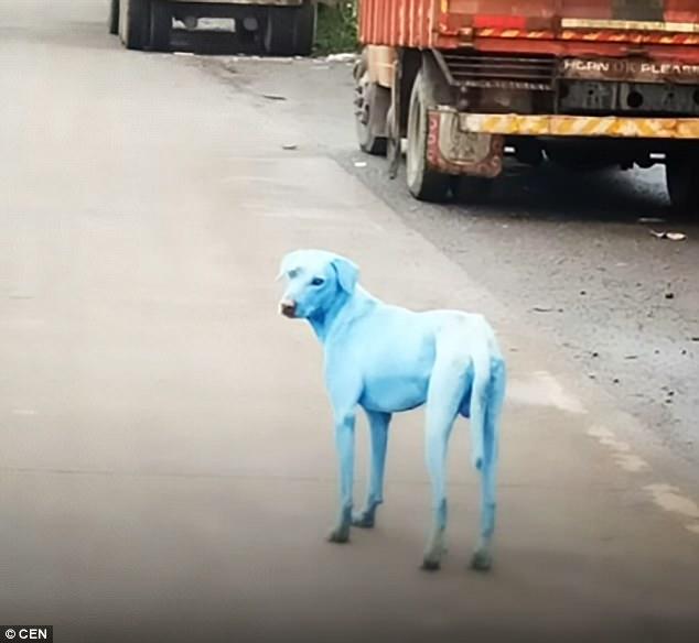 印度出現一整批「藍色流浪狗」,專家去附近的河研究都被嚇到了!