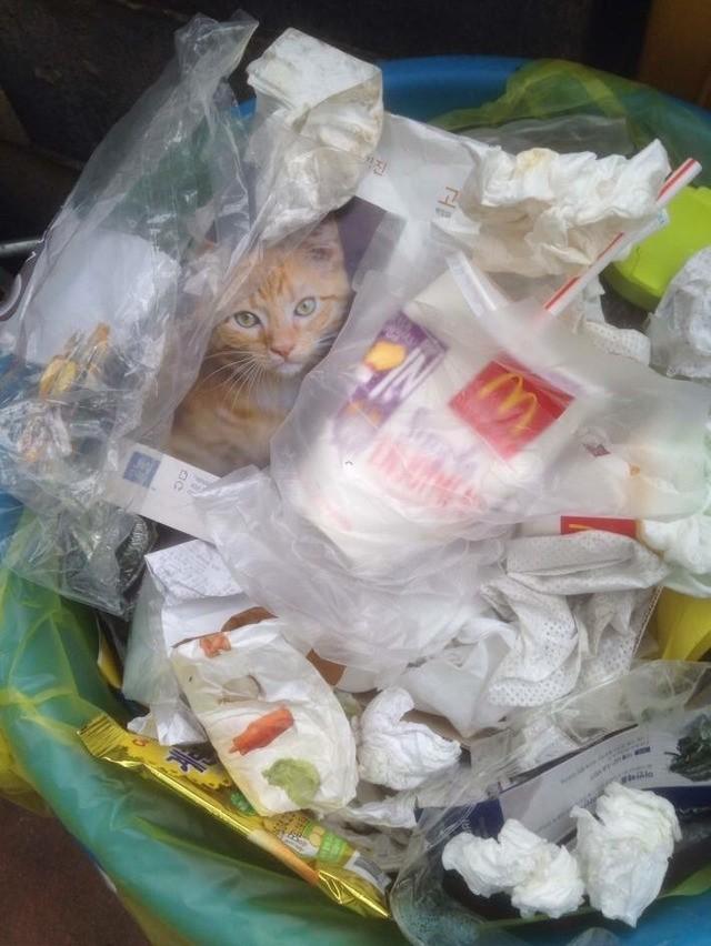 他發現「小貓困在垃圾桶」秒手刀救援,卻在「抱起貓咪的瞬間」尷尬到想死!