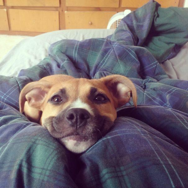 30張「我醒來看到這個」的超爆笑毛寶貝畫面!#12 狗主人最怕的一幕...