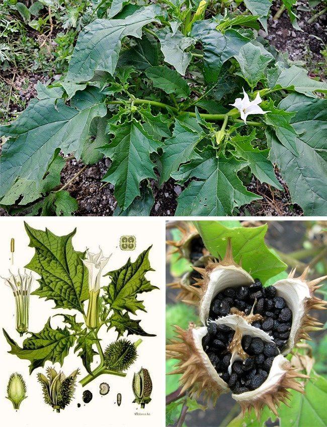 11個看起來像普通花草一樣「但會殺死你的植物」。