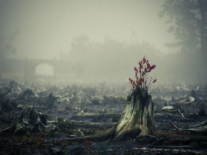 30個就算人類死百遍都還活得好好的「超頑強生命力」爆猛植物!