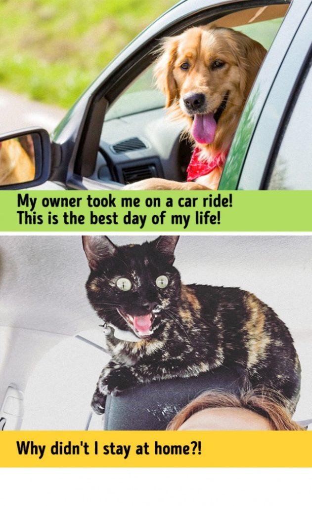 13張證明「狗狗跟貓咪來自不同的星球」超中肯爆笑對比照,#13 他們說「愛你」的方式...