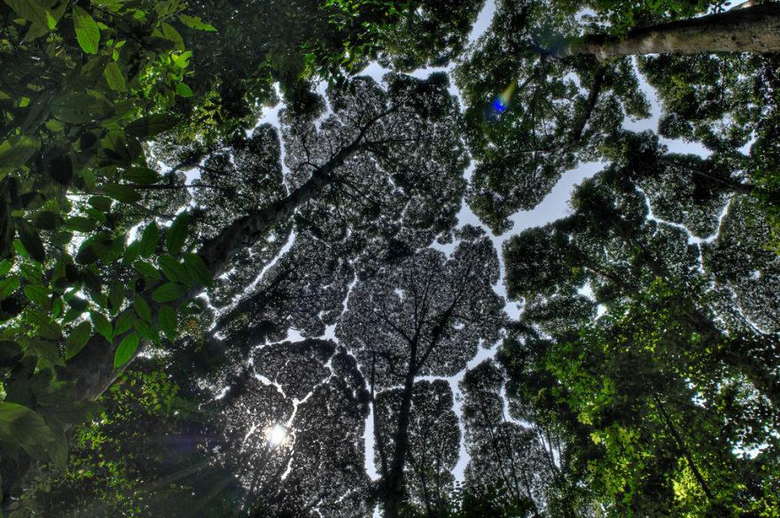 27個會讓你重生的「樹冠羞避症」驚人奇景。