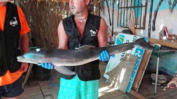 人類有多自私?海豚寶寶和媽媽走失,遊客輪流拍照致死!