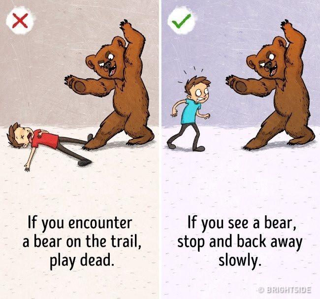 9個「反而會立刻害死你」的超瞎網路救命謠言。#5 遇到熊不能裝死!