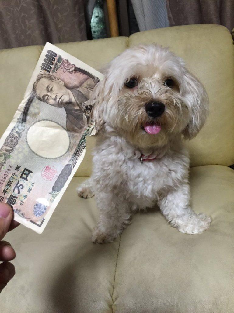 狗狗「把薪水吃光」 幾萬塊紙幣全變廢紙!要剩下「這麼多」銀行才會補給你。