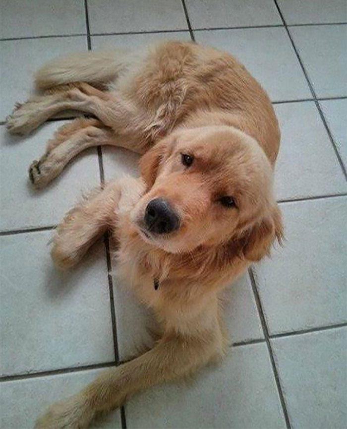 水災後發現被遺棄狗狗「向他搖尾巴」,帶去看獸醫後從毛裡找到「200隻巨型跳蚤」!